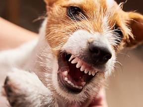 Zaútočit mohou i plemena psů, od kterých byste útok příliš nečekali.