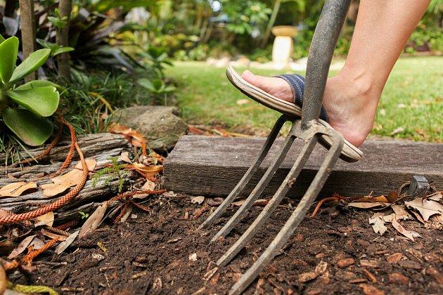 Kvalitní půdě prospěje provzdušnění rycími vidlemi spíše, než převracení rýčem