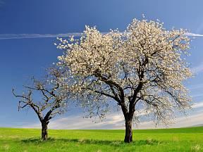 Předejděte mrtvici stromů správnou péčí.