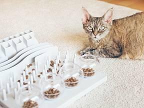 IQ trénink domácí kočky