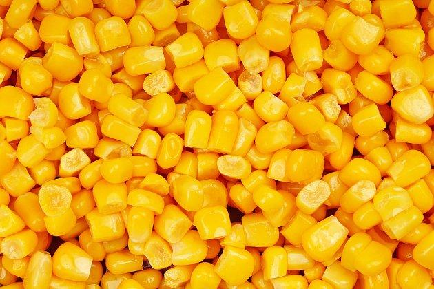Kukuřice je jednou z nejoblíbenějších druhů zeleniny, kterou můžete pěstovat ve své zahradě bez větších nároků.