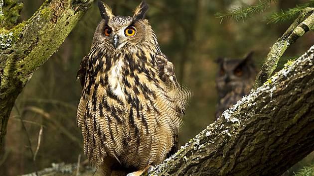 velký ptáci sex v lese