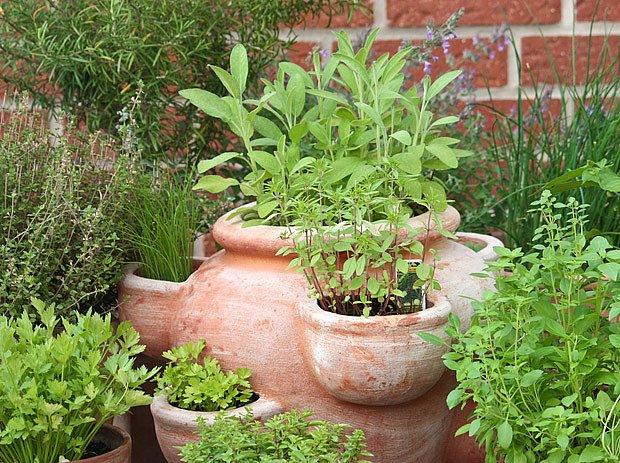 petrželák s bylinkami