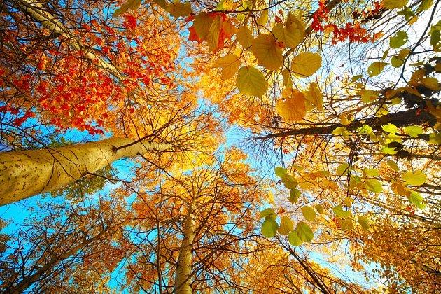 Podzimní barvy listů a lístků.