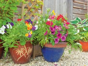 Zahradní práce v květnu