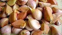 Stroužky česneku připravené k výsadbě
