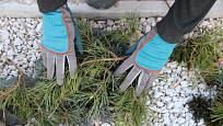 Chvojí rostliny chrání před výkyvy teplot, ale nedrží vlhkost