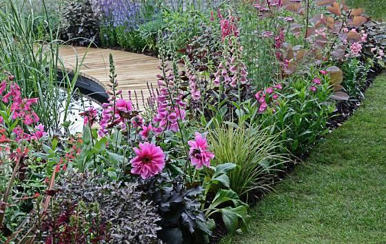 Trvalkový záhon s jiřinkami bude zahradu zdobit po celé babí léto