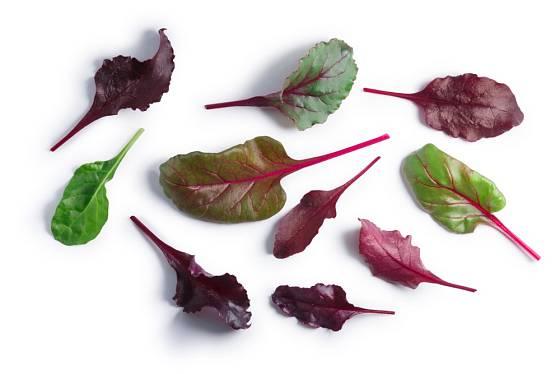 Mladé listy mangoldu, zvané baby leaves, jsou oblíbenou součástí salátů i atraktivní ozdobou jídel.
