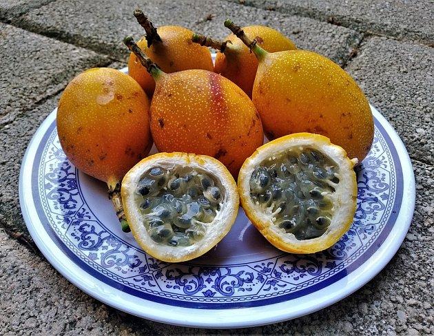 Plody mučenky jazykovité (Passiflora ligularis).