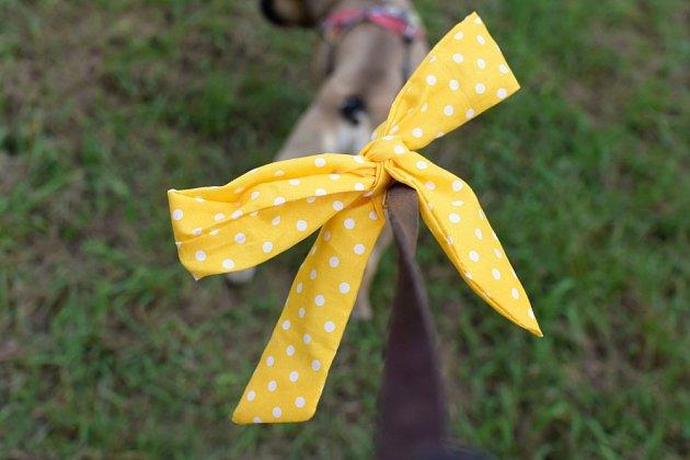 Ke psu se žlutou stužkou se nepřibližujte