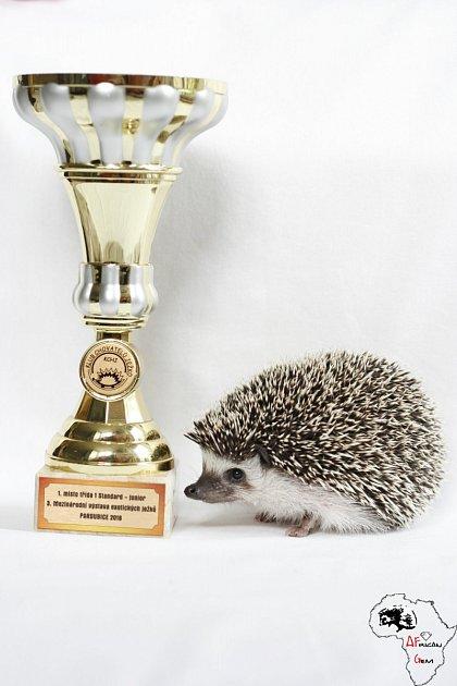 ježek - šampion