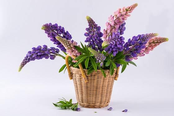 Vložíme-li do košíku dostatečně velkou sklenici s vodou, můžeme ho použít místo vázy.
