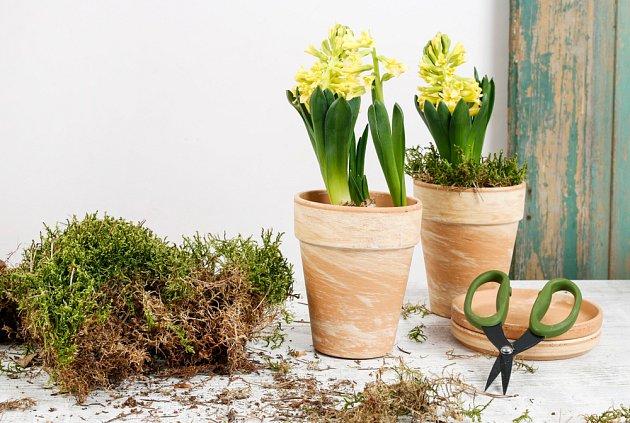 Mech v květináči zabrání odparu vody z půdy.