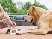 Doby, kdy pes zkrátka dostal, co lidem zbylo po jídle, jsou naštěstí dávno pryč