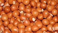 plody klokoče