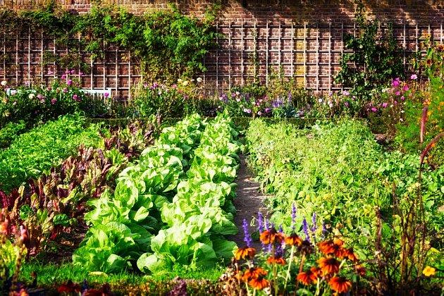 salatova zahrada