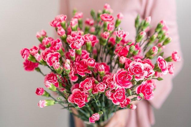 Karafiáty s drobnějšími květy nakvétají postupně a tak se z nich můžeme radovat opravdu dlouho.