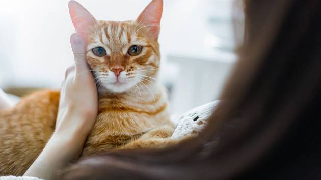 Kočky jsou okouzlující a svébytné kamarádky