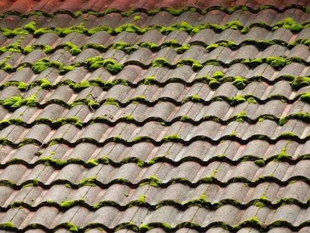 Mech na střeše zadržuje vlhkost a může narušovat povrch materiálu střešní krytiny.