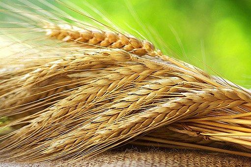 vejce lze uchovávat i v pšenici