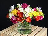 Frézie jsou jedněmi z nejpůsobivějších květin vhodných k řezu.