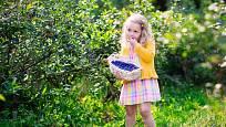 Zahradní borůvky potěší malé i velké