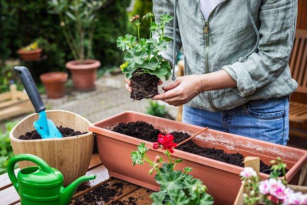 Při přesazování si dejte pozor, aby jste rostliny umístily do kvalitního substrátu