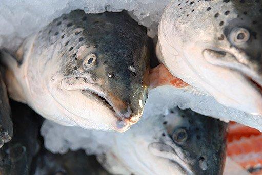 čerstvě ulovené ryby na polévku