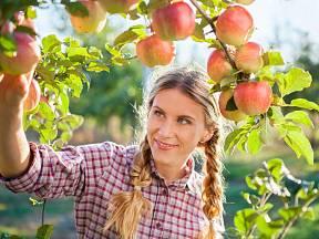 Chcete obrázková jabkla? Teď je správný čas!