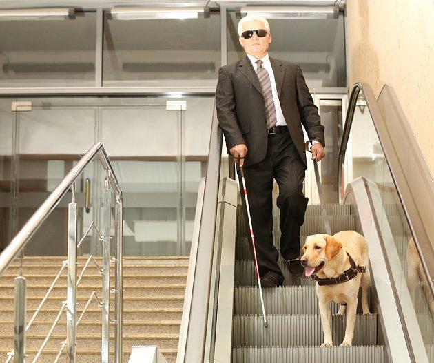 Dobře trénovaný vodící pes je spolehlivý průvodce pro slabozraké.