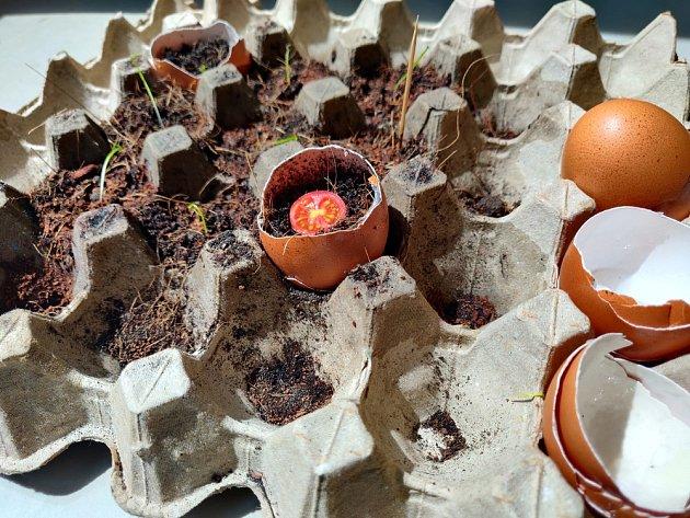 K předpěstování rostlin můžeme využít papírová plata od vajec.