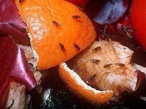 Octomilky lákají zbytky potravin.