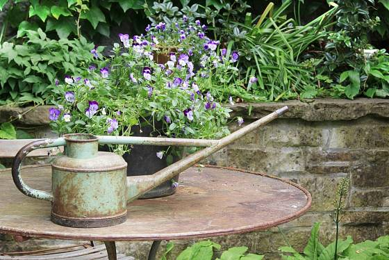Suchá zahradní zídka vytváří působivé pozadí pro nádhernou historickou konvičku na starém kovovém stolku.