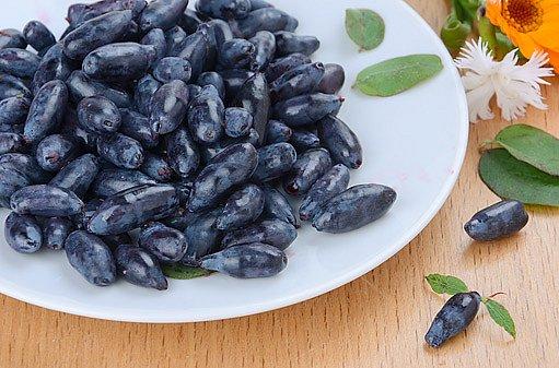 jedlé plody zimolezu