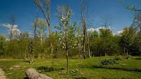 Na rozhraní areálu Garden Tulln a lužního lesa vyrostl jedlý les.