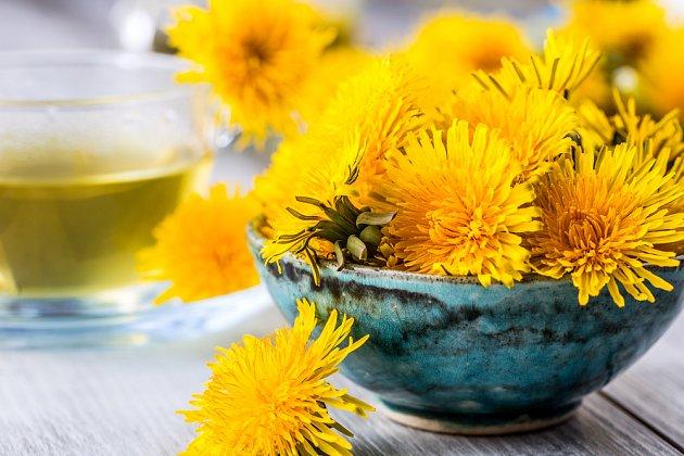 Květy pampelišek se hodí k přípravě nejrůznějších druhů kosmetiky.