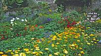 Měsíčkový záhon je krásnou i užitečnou součástí květinové zahrady