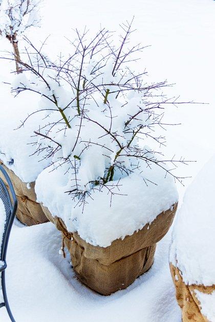 Květináče izolované bublinkovou fólií a jutou, svrchu pak sněhem