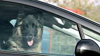V létě nikdy nenechávejte psa zavřeného v autě.