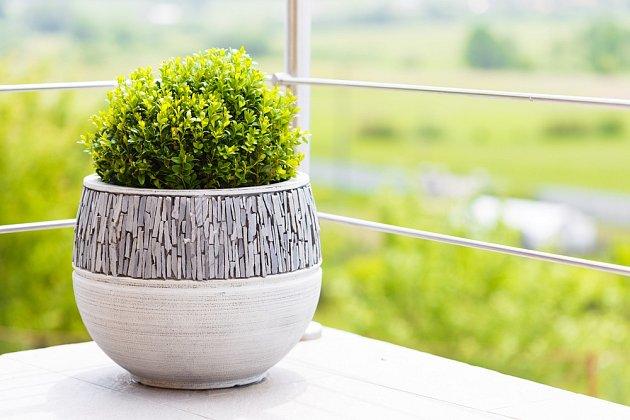 Na terasy se hodí také zimostrázy (buxusy), které vyniknou v zajímavých, nejlépe mrazuvzdorných nádobách.