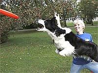 Dogfrisbee Jany Vadasové