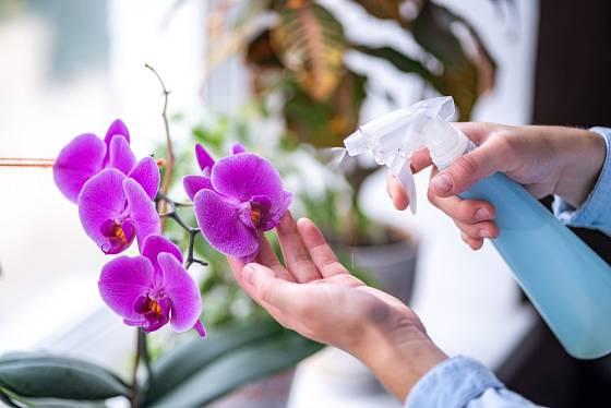 Krásně kvetoucí orchideje