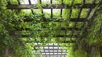 Pergola je oporou pro popínavé rostliny