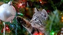 Ozdoby na vánočním stromečku jsou lákavé pro domácí mazlíčky