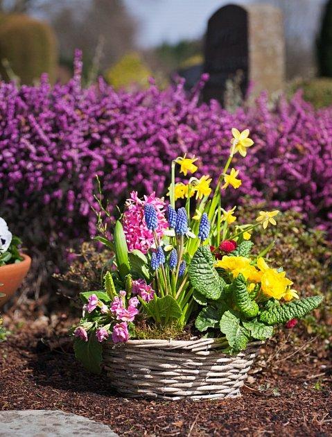 Proutěný košík osázený jarními květinami.