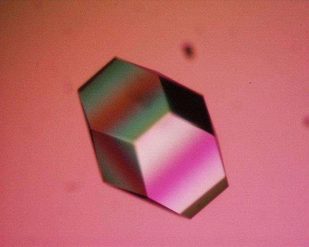 Krystal lysozymu. Na tuhle látku jsou bakterie krátké.