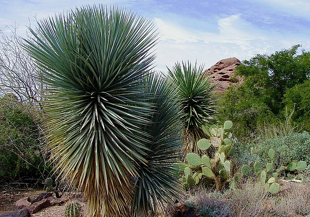 pouštní zahrada plná sukulentů