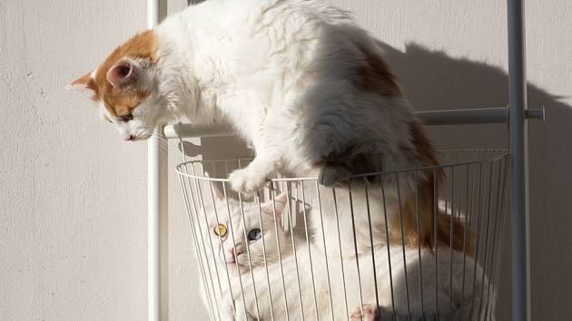Velcí milovníci koček obvykle doma nemívají jen jednu čtyřnohou společnici.