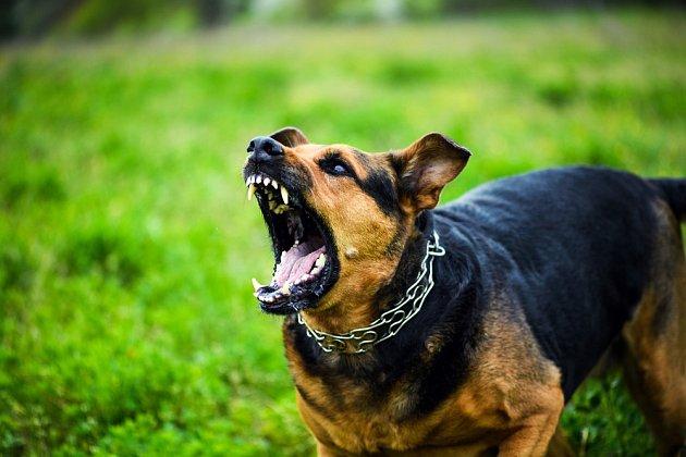Pes může zaútočit nečekaně, například když se lekne, nebo když mu někdo šlápne na packu.